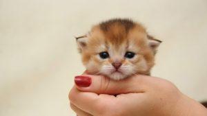 Cat   FAIR Study
