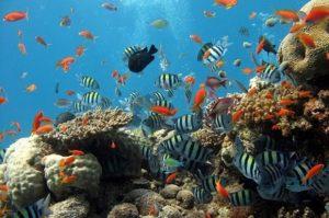 Fish Aquarium | FAIR Study