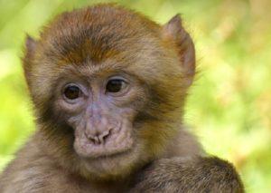 Monkey | FAIR Study