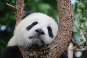 Panda | FAIR Study