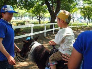 Pony | FAIR Study