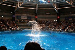 Shinagawa Aquarium | FAIR Study
