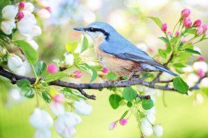 Spring Bird | FAIR Study