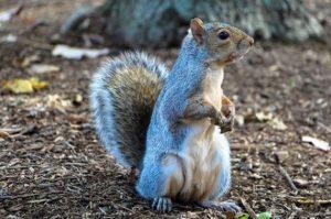 Squirrel | FAIR Study