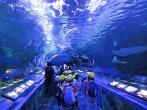 Tokyo Tower Aquarium | FAIR Study